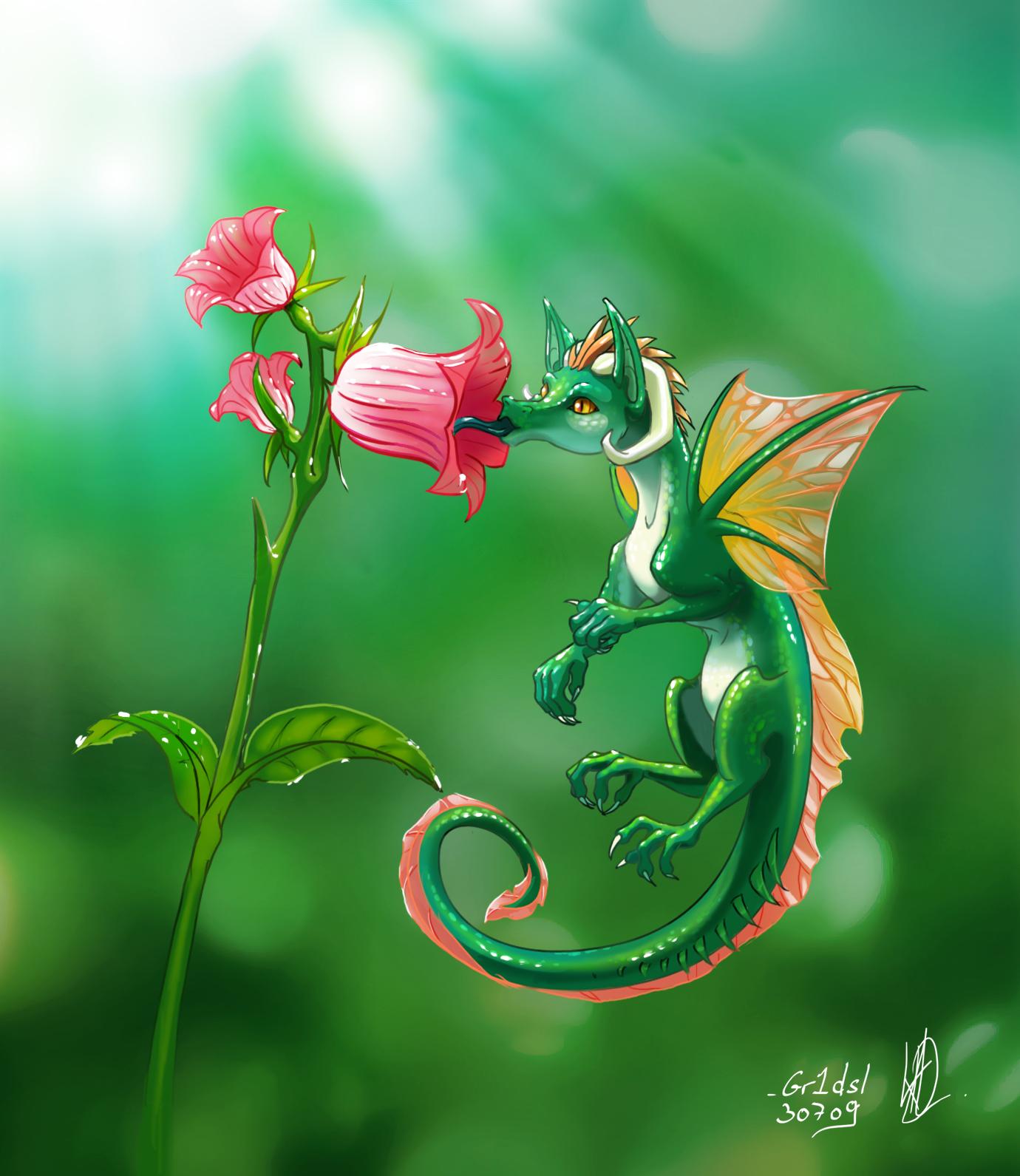 Dragons 2012 -Fynn